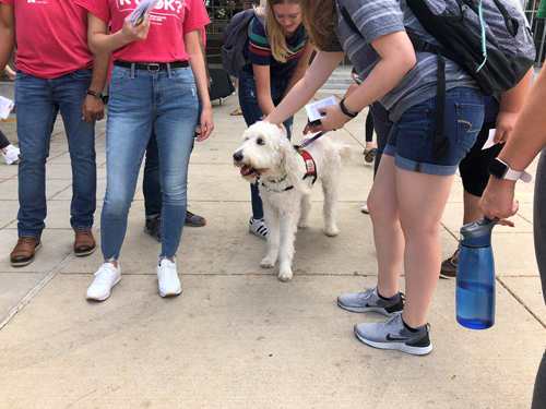 Students with a therapy dog at an RU OK event